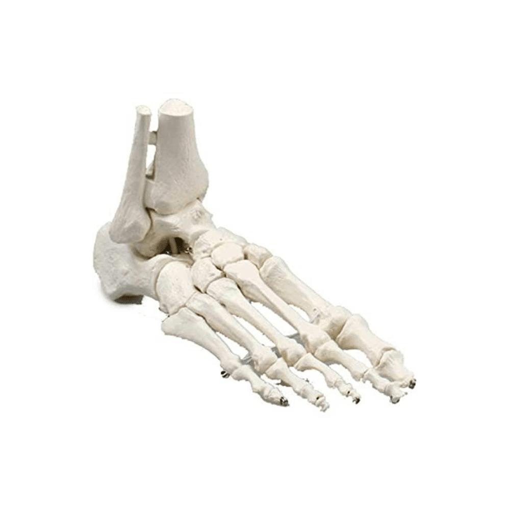 voetskelet